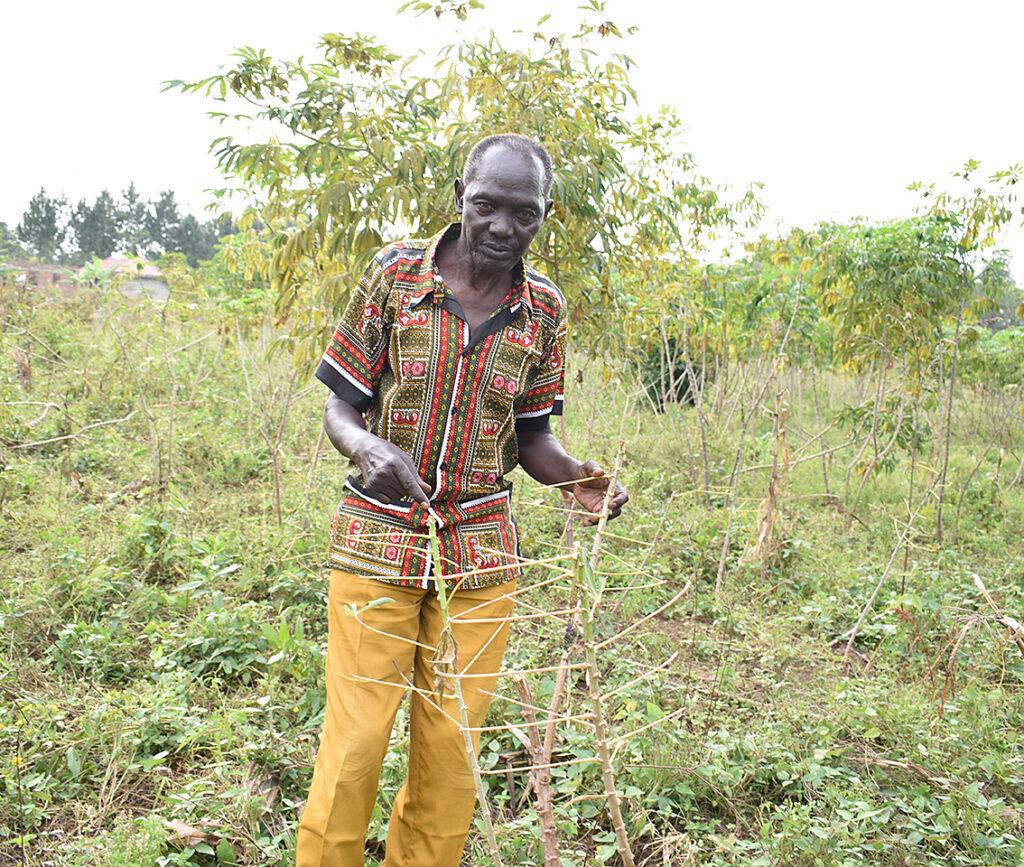 Uganda Heuschrecken